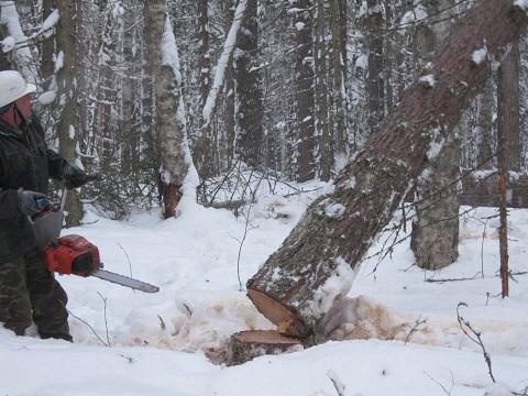 Заготовка леса